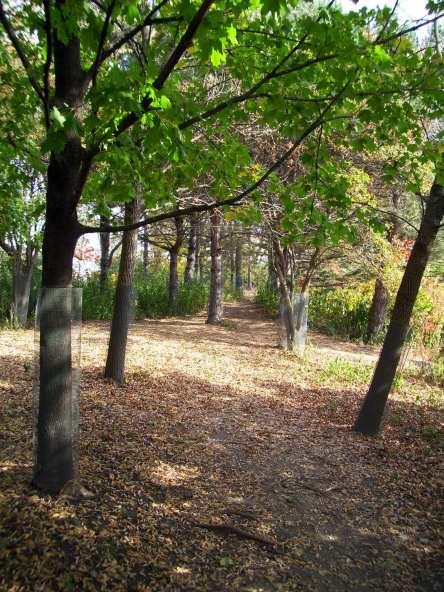 LK Trails